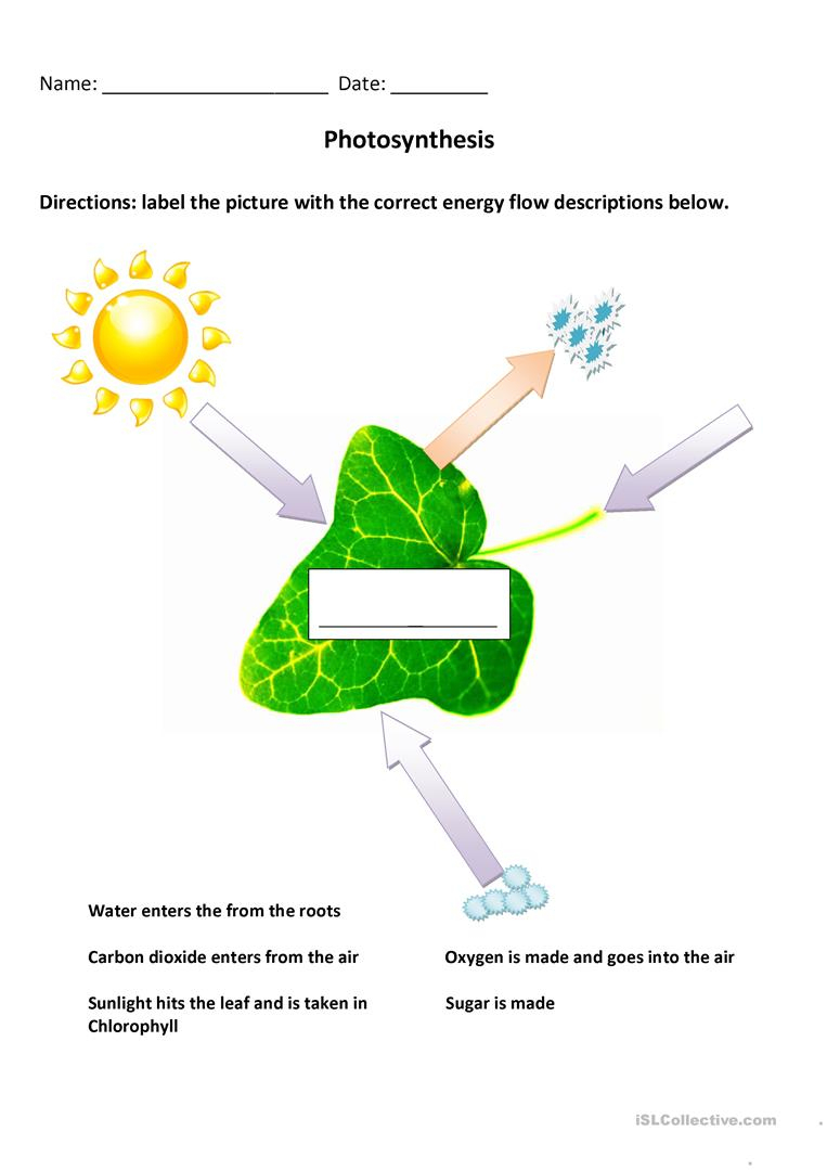 2 Free Esl Photosynthesis Worksheets | Free Printable Photosynthesis Worksheets