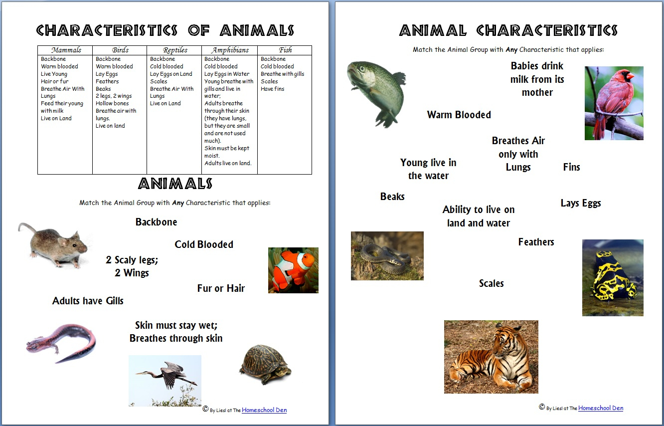 Animals And Their Characteristics (Free Worksheet) - Homeschool Den | Free Printable Worksheets On Vertebrates And Invertebrates