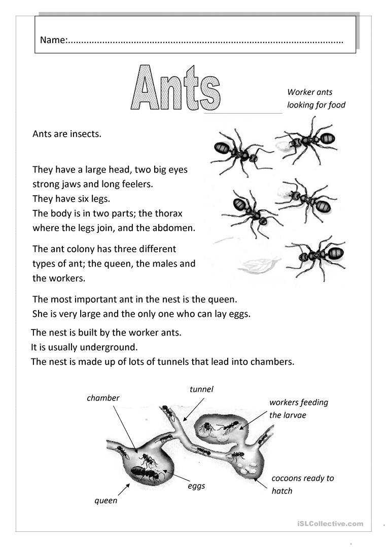 Ants Worksheet - Free Esl Printable Worksheets Madeteachers | Ant Worksheets Printables
