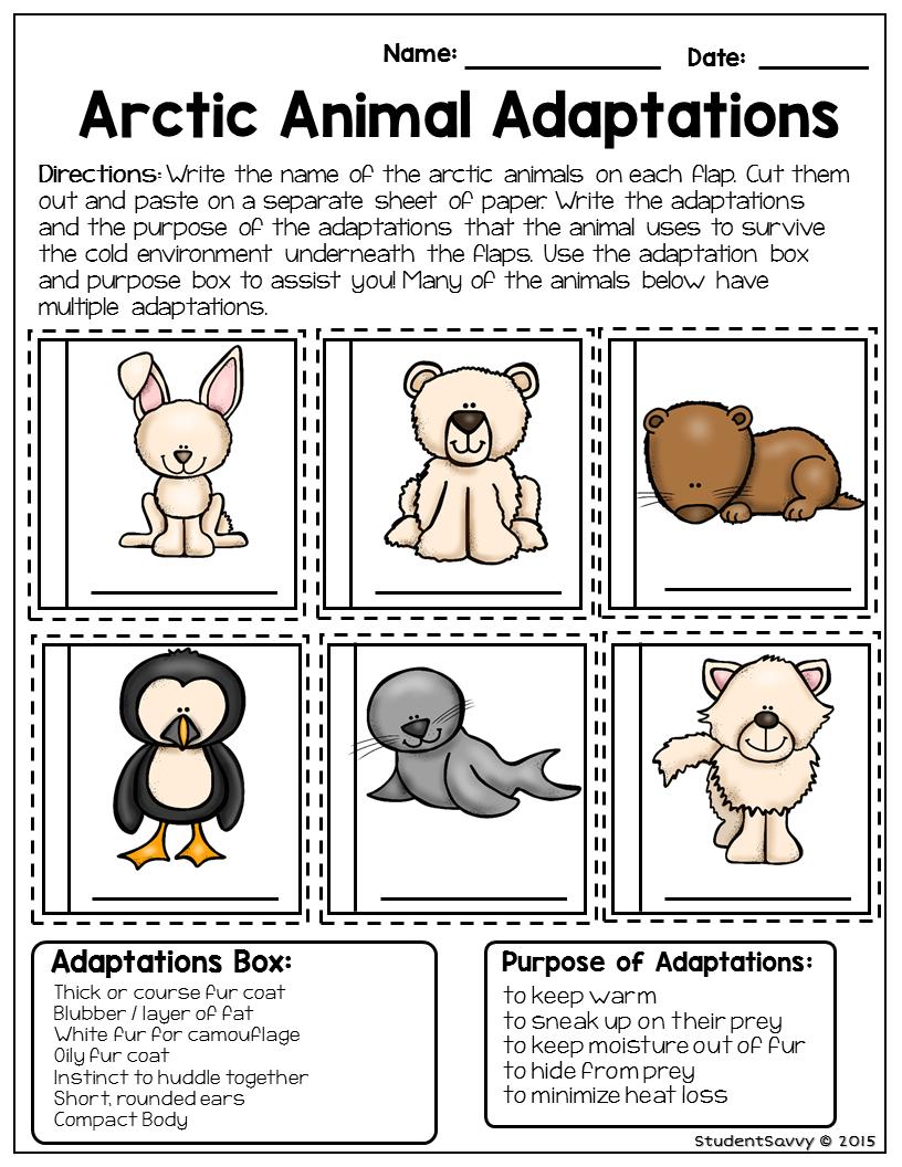 Arctic Animal - Free Resource   Teaching Freebies   Animal   Free Printable Worksheets Animal Adaptations