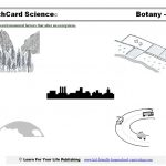 Botany Science Projects | Celery Experiment Printable Worksheet