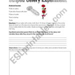 English Worksheets: Colored Celery Experiment | Celery Experiment Printable Worksheet
