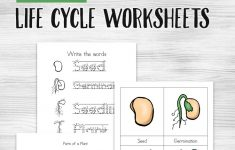 Free Printable Plant Life Cycle Worksheets – Money Saving Mom | Free Plant Life Cycle Worksheet Printables