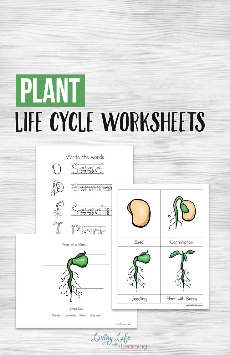 Free Printable Plant Life Cycle Worksheets - Money Saving Mom | Free Plant Life Cycle Worksheet Printables