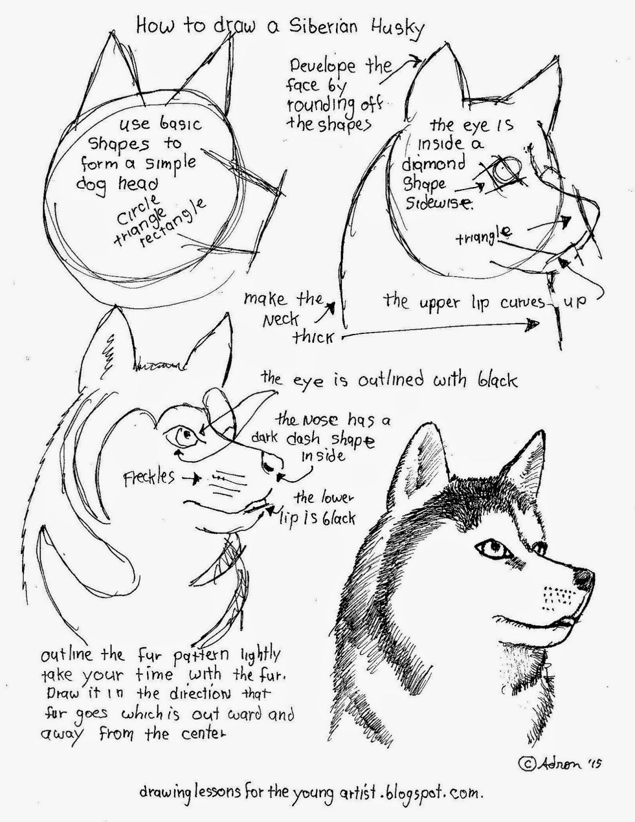 How To Draw Worksheets For The Young Artist: How To Draw A Siberian | Free Printable Drawing Worksheets