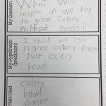Kearson's Classroom: The Great Celery Experiment | Celery Experiment Printable Worksheet