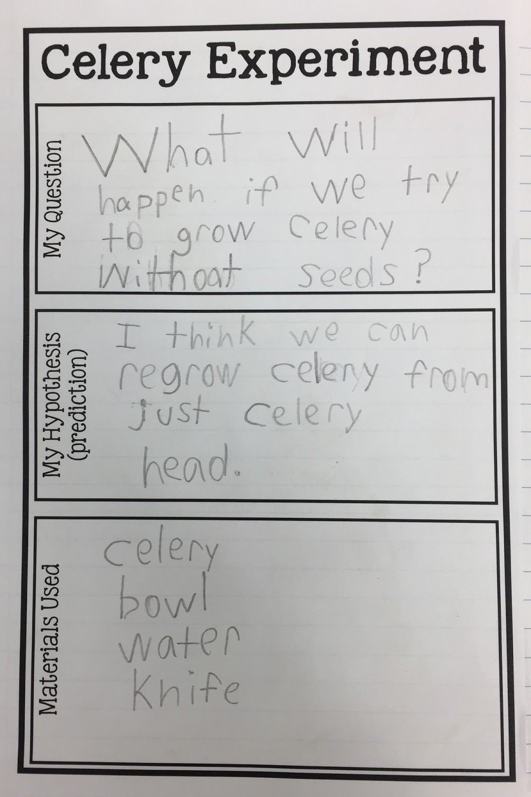 Kearson's Classroom: The Great Celery Experiment | Celery Experiment Printable Worksheet
