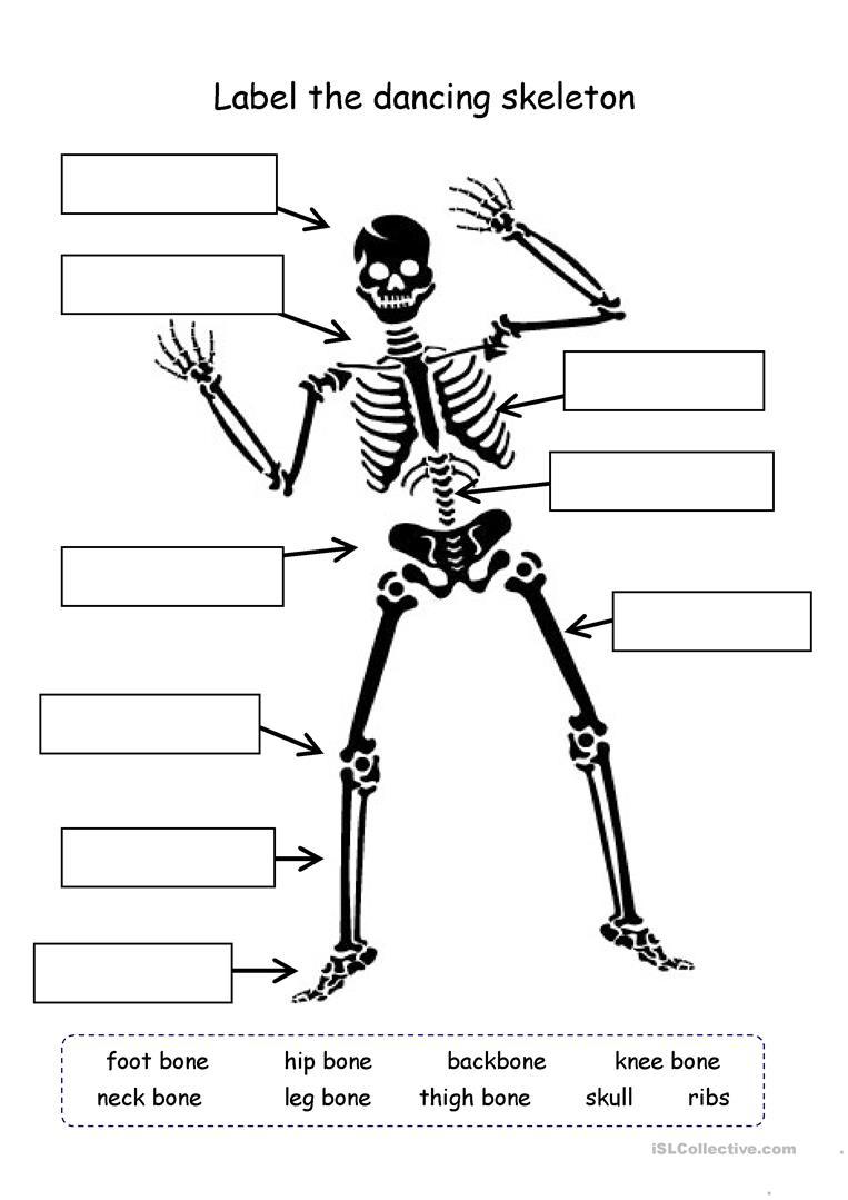 Label The Skeleton Worksheet - Free Esl Printable Worksheets Made | Human Skeleton Printable Worksheet