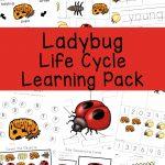 Ladybug Life Cycle   Fun With Mama | Free Printable Ladybug Life Cycle Worksheets