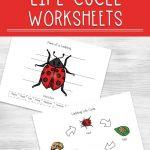 Ladybug Life Cycle Worksheets For Kids | Free Printable Ladybug Life Cycle Worksheets