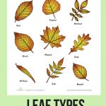 Leaf Types | Homeschool | Pinterest | Science, Education And Worksheets | Free Printable Leaf Worksheets