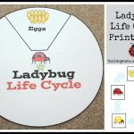 Life Cycle Activities – Minecrafttoys.club | Free Printable Ladybug Life Cycle Worksheets