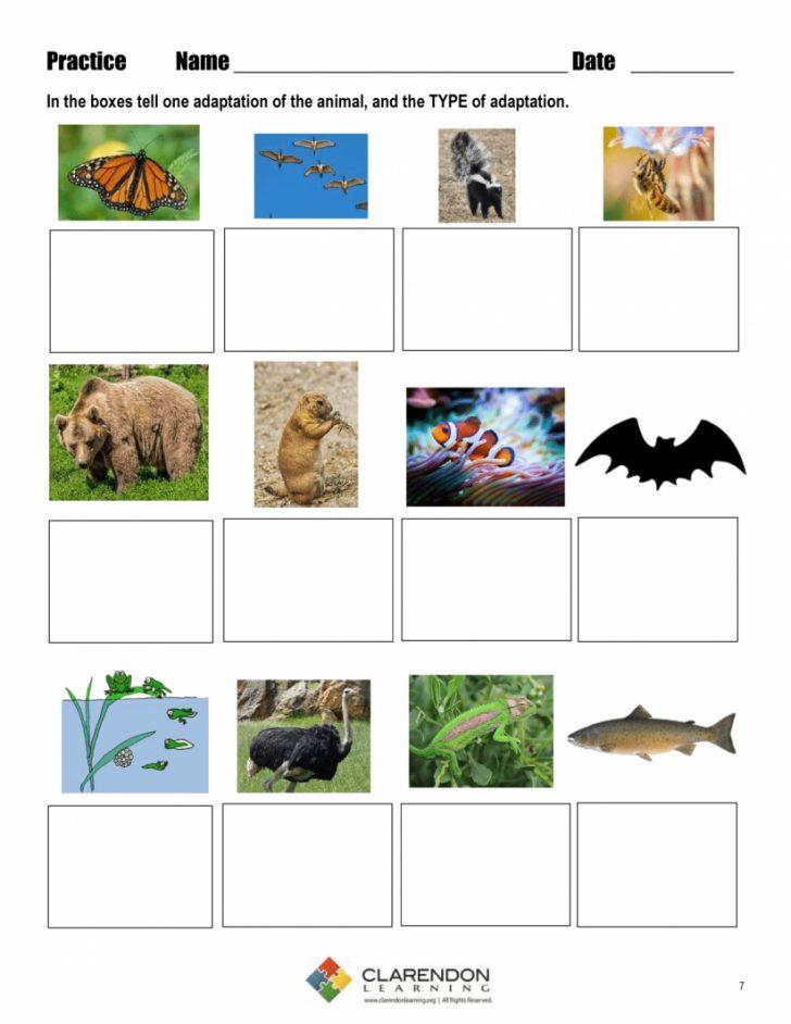 Free Printable Worksheets Animal Adaptations