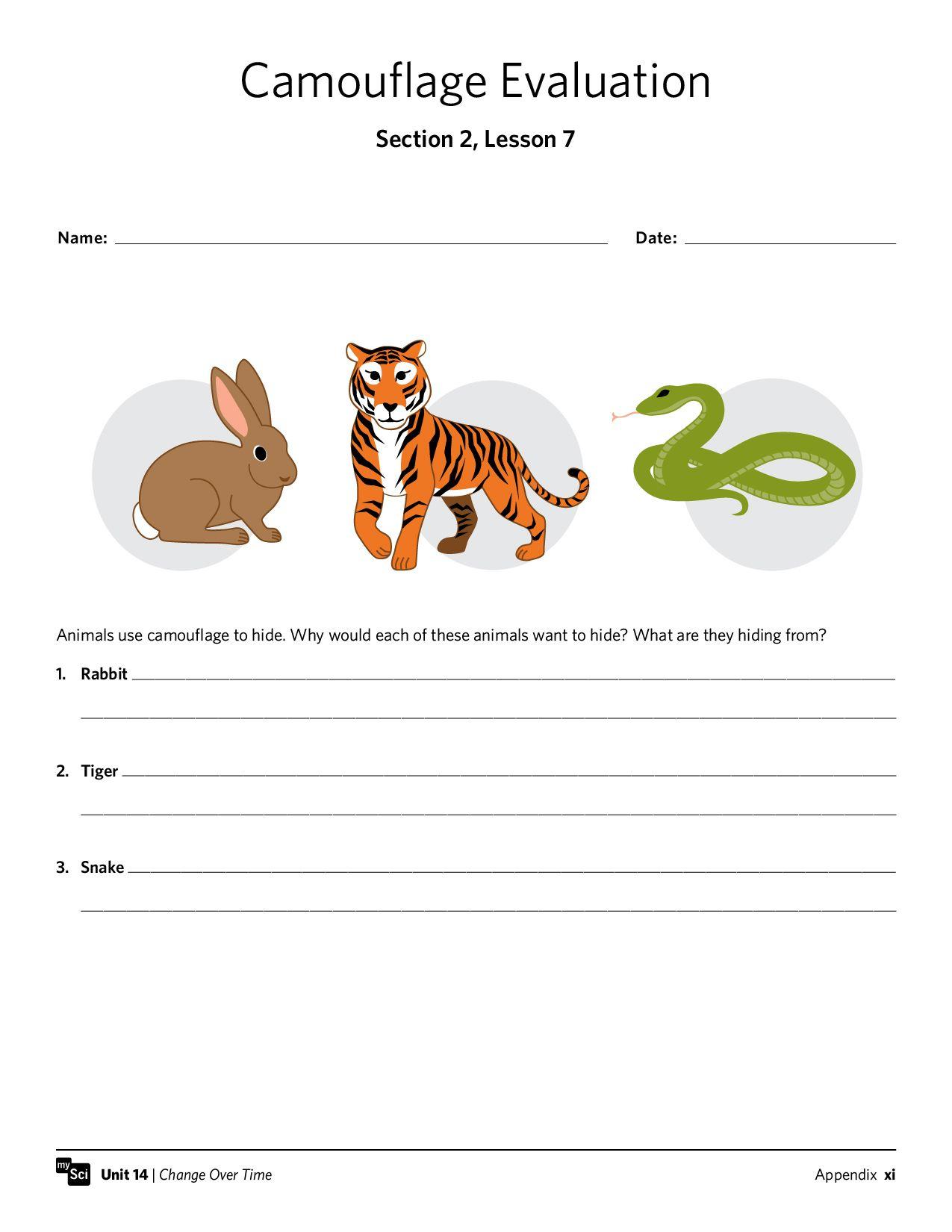 Mysci Unit 14 - Isp   Third Grade   Third Grade, Grade 1, Worksheets   Free Printable Worksheets Animal Adaptations