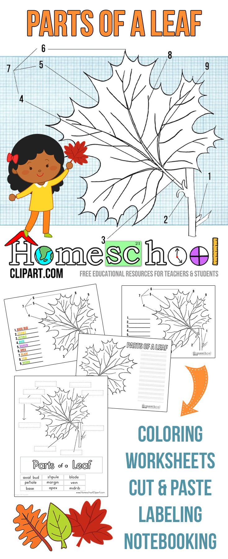 Parts Of A Leaf Printables | Autumn And Fall Homeschool Activities | Free Printable Leaf Worksheets