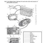 Photosynthesis Diagram Worksheet | Biology Photosynthesis | Free Printable Photosynthesis Worksheets