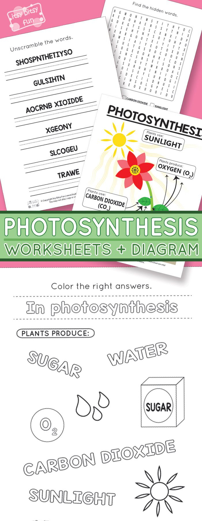 Photosynthesis Worksheets For Kids | Homeschooling Ideas | Free Printable Photosynthesis Worksheets