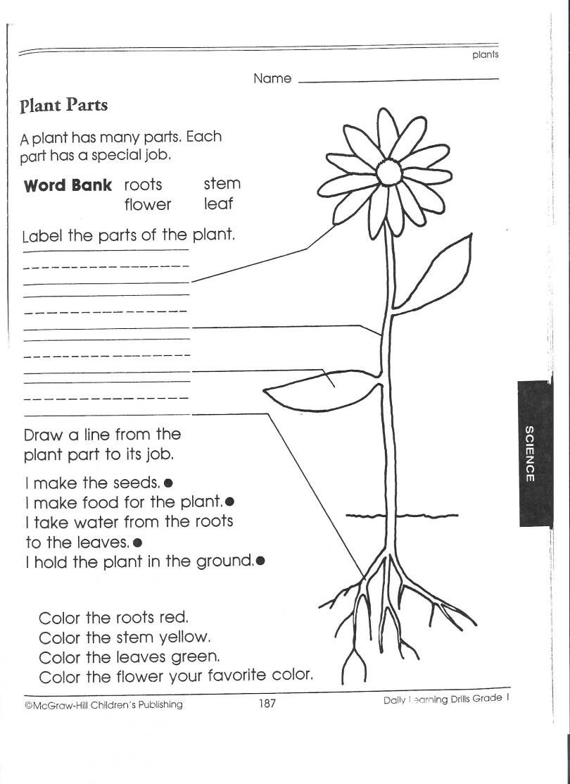 Pincindy Hovis On Science | Science Worksheets, 1St Grade | Free Printable Fifth Grade Science Worksheets
