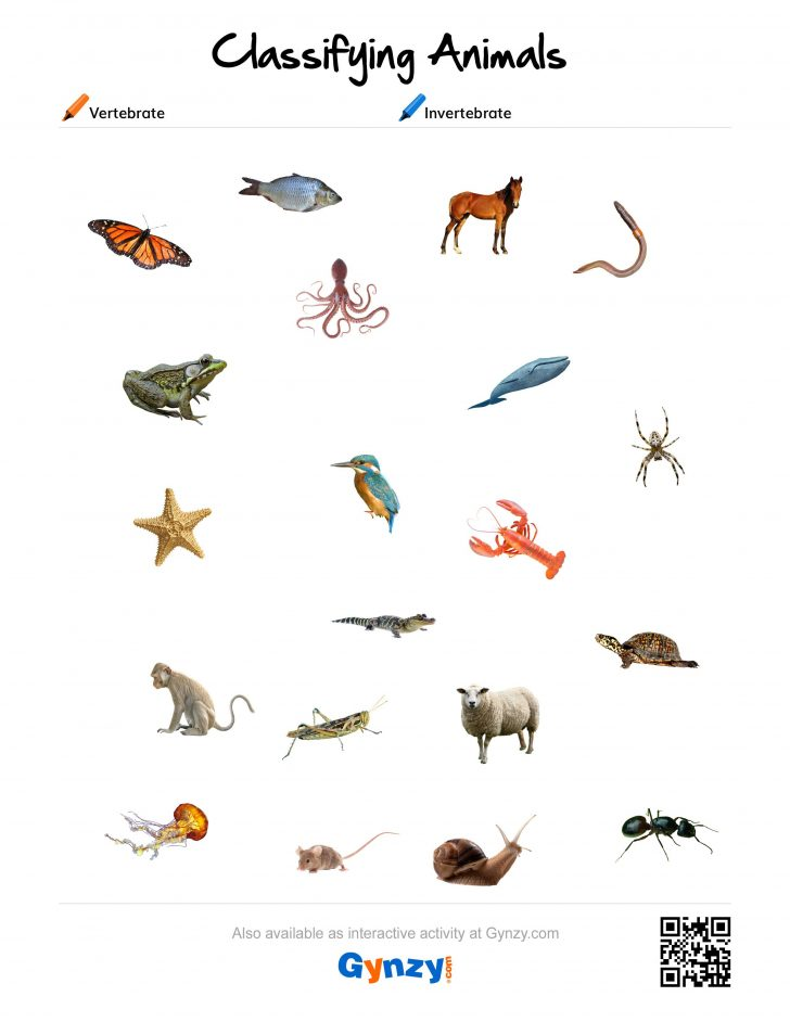 Free Printable Worksheets On Vertebrates And Invertebrates