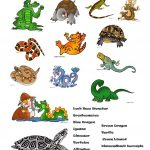 Reptiles Worksheet   Free Esl Printable Worksheets Madeteachers | Free Printable Reptile Worksheets