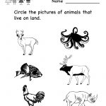 Science Printables For Kids | Life Science Animal Worksheet   Free | Science Worksheets For Kindergarten Free Printable