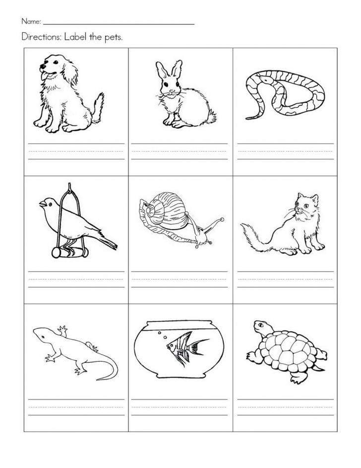 Free Printable Pet Worksheets