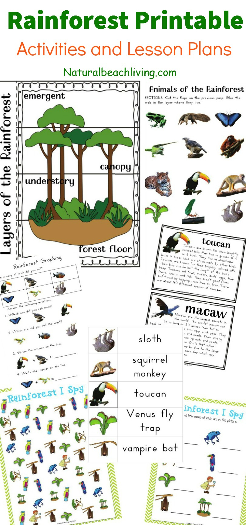 The Best Rainforest Printable Activities For Kids - Natural Beach Living | Rainforest Printable Worksheets