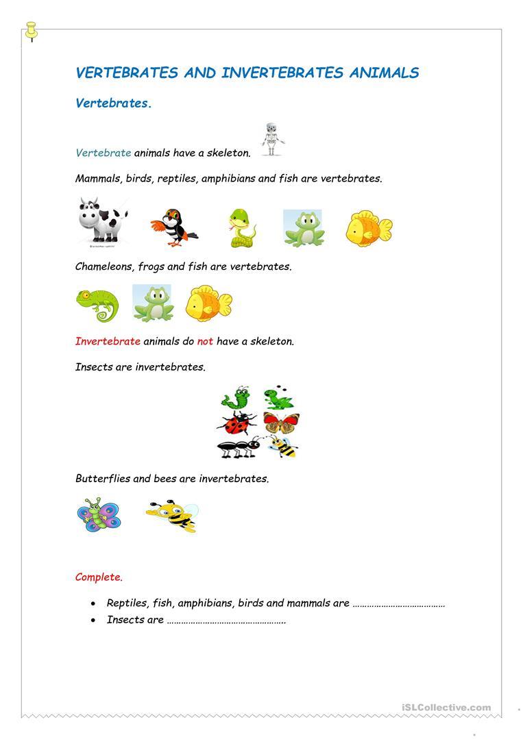 Vertebrates And Invertebrates Worksheet - Free Esl Printable | Free Printable Worksheets On Vertebrates And Invertebrates