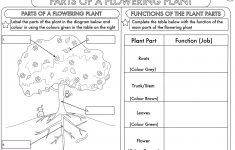Science Worksheets Ks2 Printable