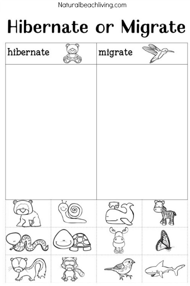 You'll Love These Winter Animals For Preschool Ideas | Montessori | Free Printable Hibernation Worksheets